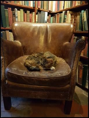 Un affezionato cliente della libreria Shakespeare & Co